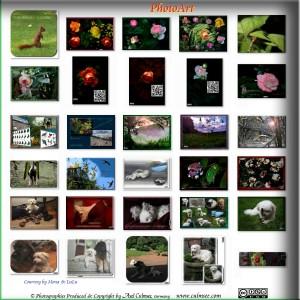 PhotoArt gallery survey