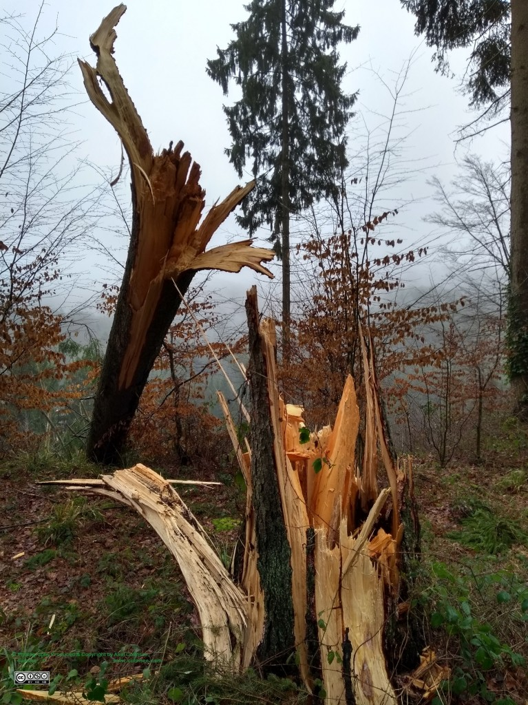 burst tree trunk