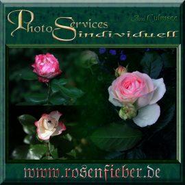 Collage Rosa 3er