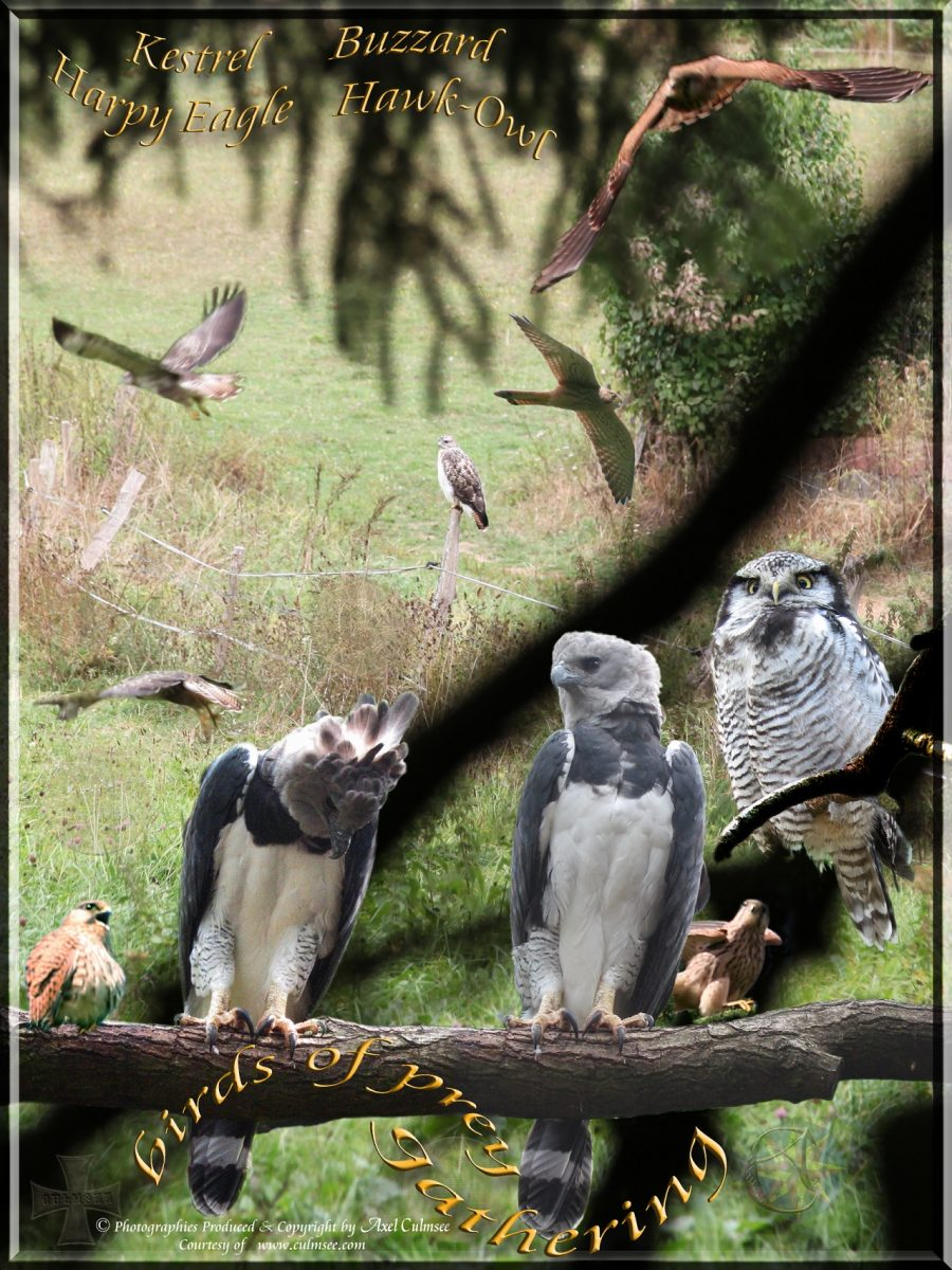 birds of prey gathering