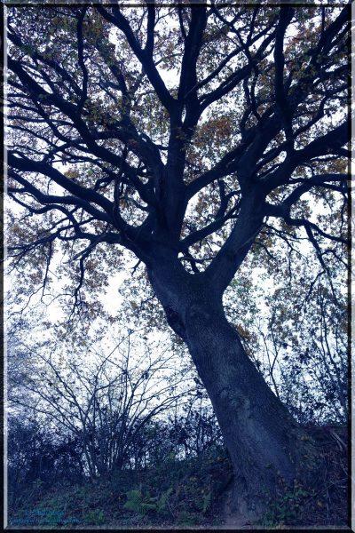 impressing tree