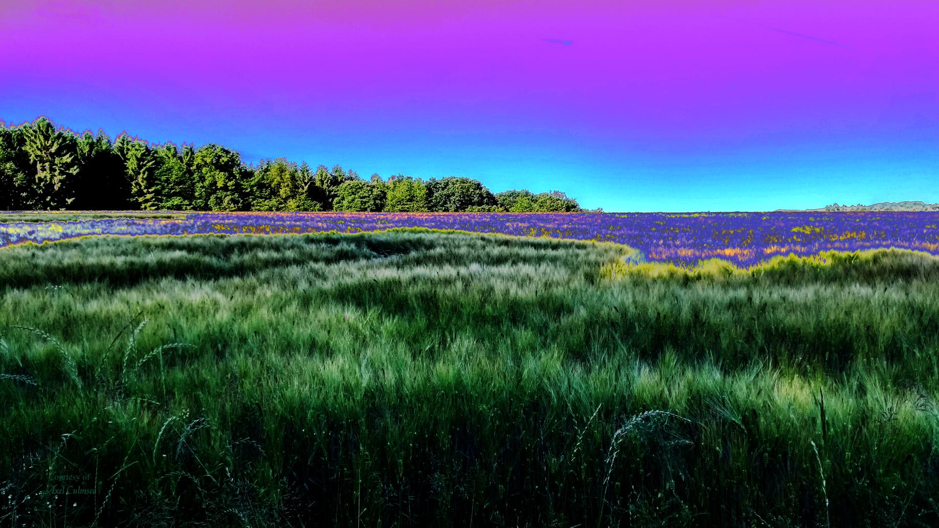Westerwald solarized lavender