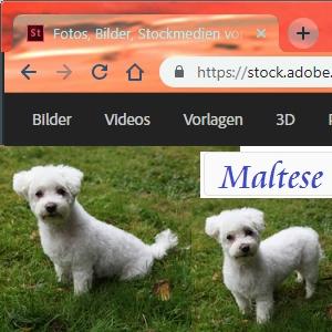 Adobe Stock Photos Maltese by Axel Culmsee