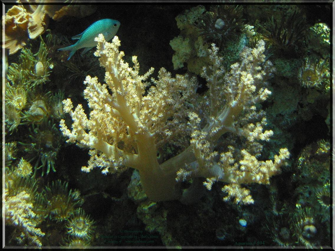 Aquarium scenery