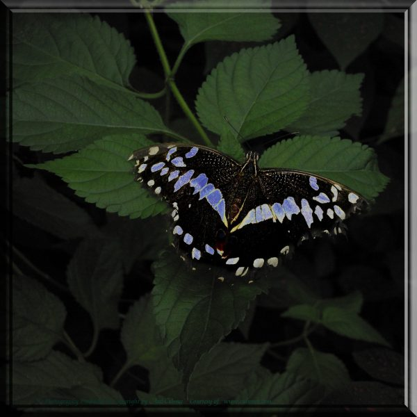 Butterfly edited