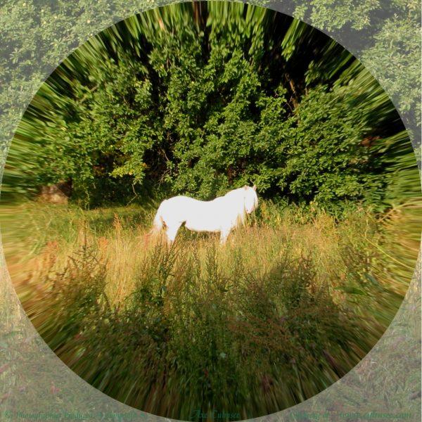 wizardry woods horses