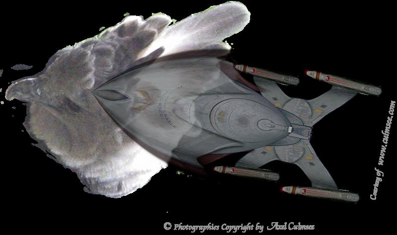 HARPY EAGLE NCC-26901