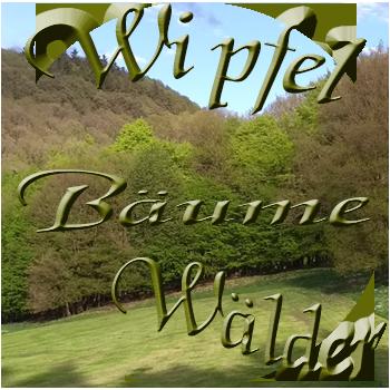 Wipfel Baeume Waelder