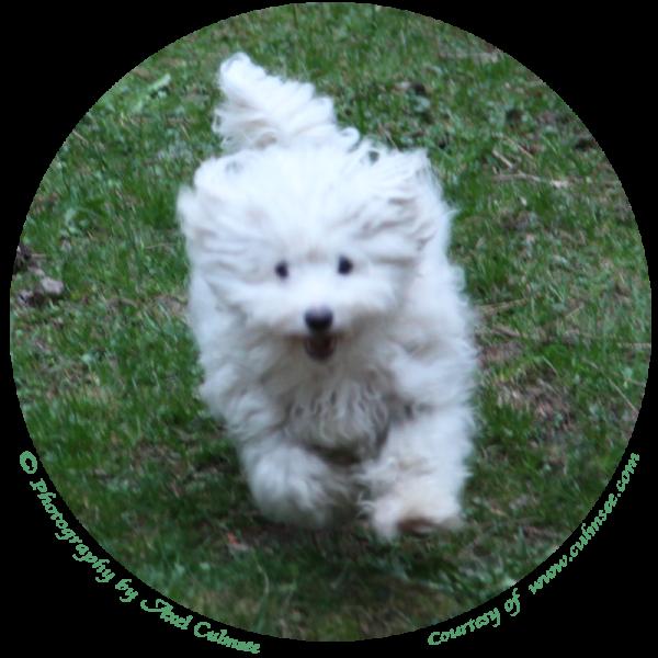 speedy LuLu's run