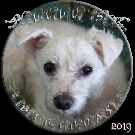 LuLu's birthday 2019