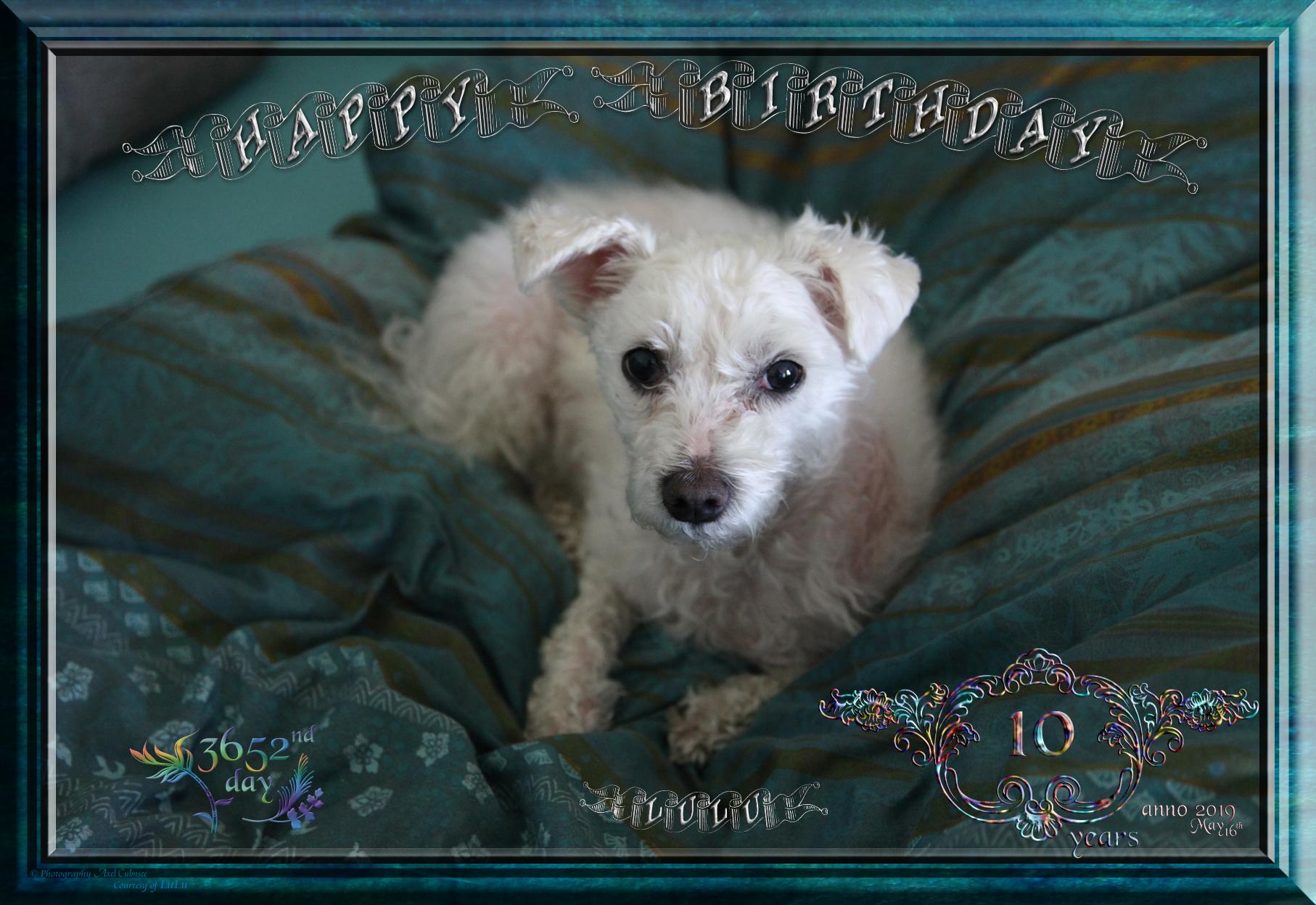 LuLu's 10th Birthday