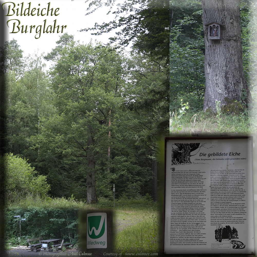 Burglahr Bildeiche Collage