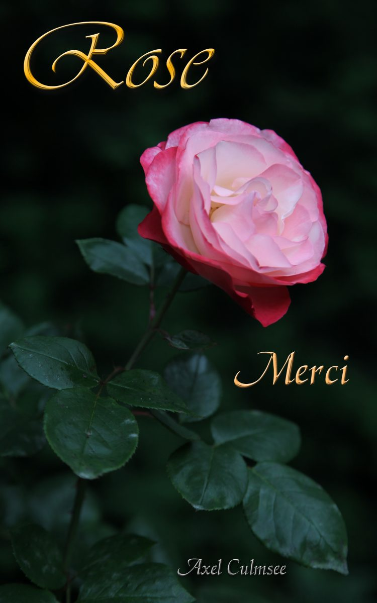 Amazon eBook Cover von Axel Culmsee Rose Merci