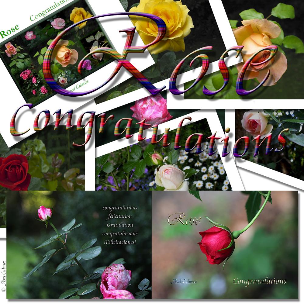 Vorschau einiger Seiten meines Buches Rose Congratulations Amazon kdp Edition