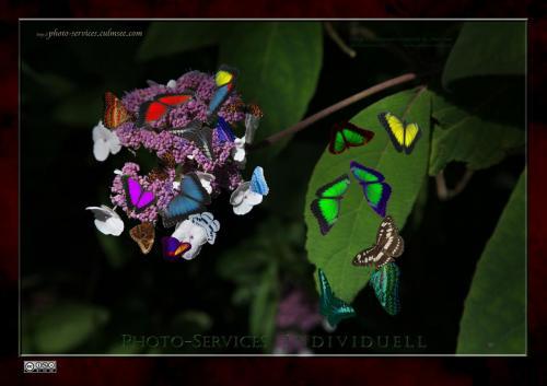Butterfly-multi-4085 P-S-I