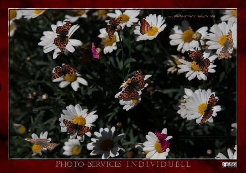 Butterfly-multi-4764 P-S-I