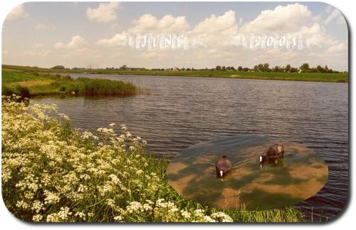 Chelmza 2001 Collage  3-10A-13A