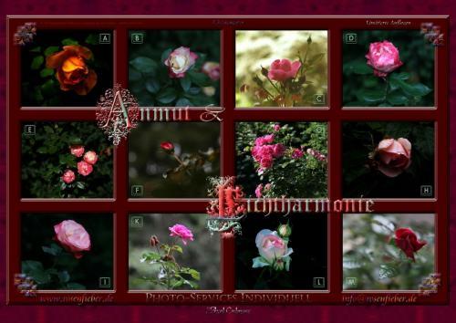 Kalender 2012 Nrn