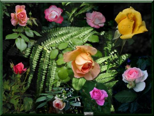 Rosen-Collage