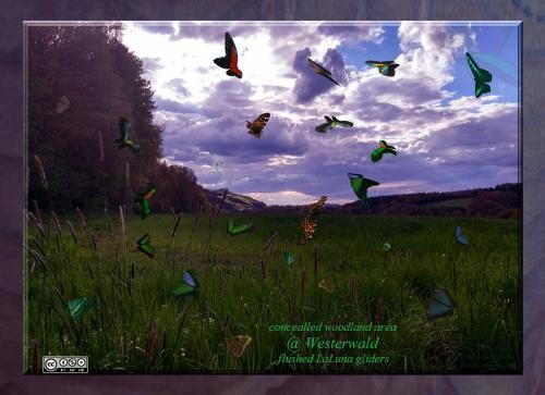 Westerwald-Butterflies