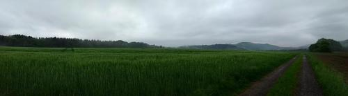 field-panorama 2017-05-19