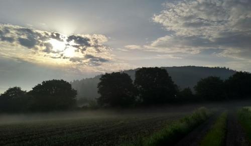 nebel-westerwald 2017-05-29 i