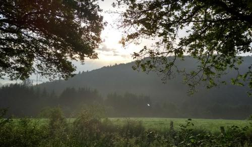 nebel-westerwald 2017-05-29 m