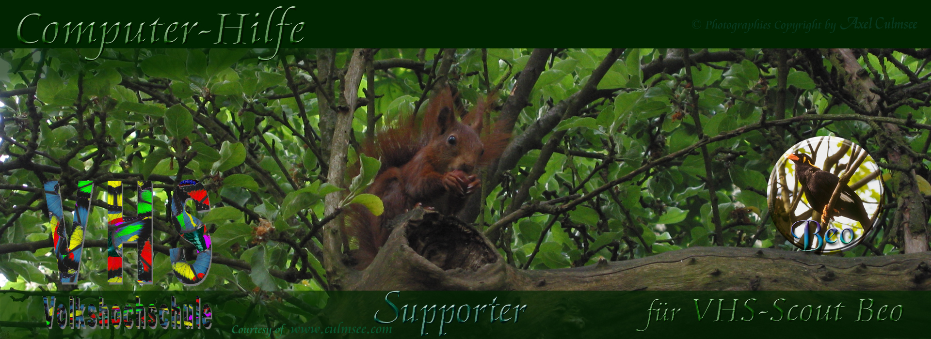 Supporter squirrel for Scout Beo