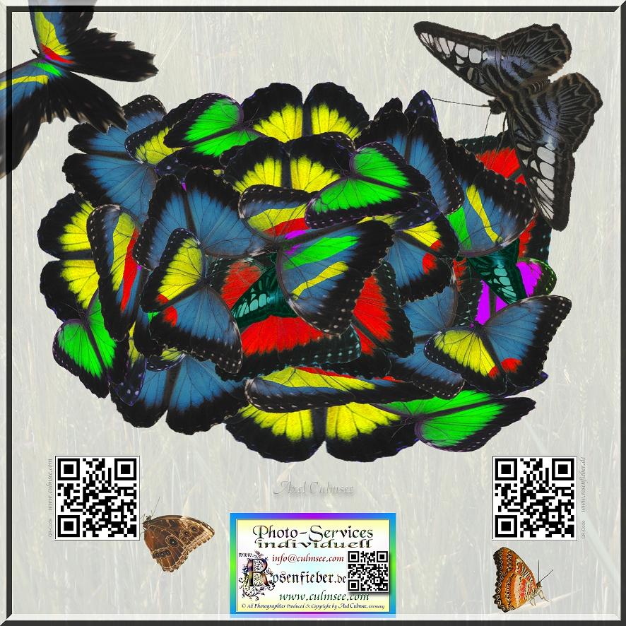 Versammlung der Schmetterlinge