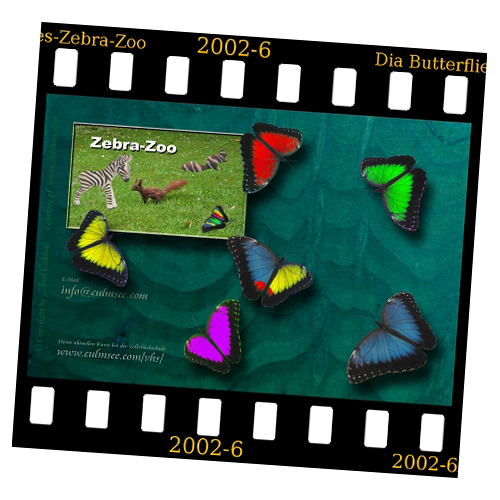 slide Butterflies with Zebra Zoo