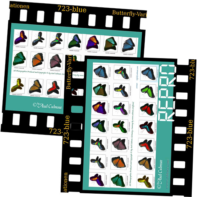 slide Butterfly variations repro