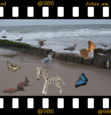 slide Sylt breakers with Zebra Party at beach