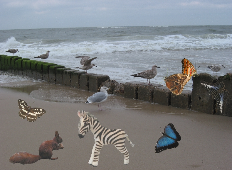 Collage Zebra uam am Strand