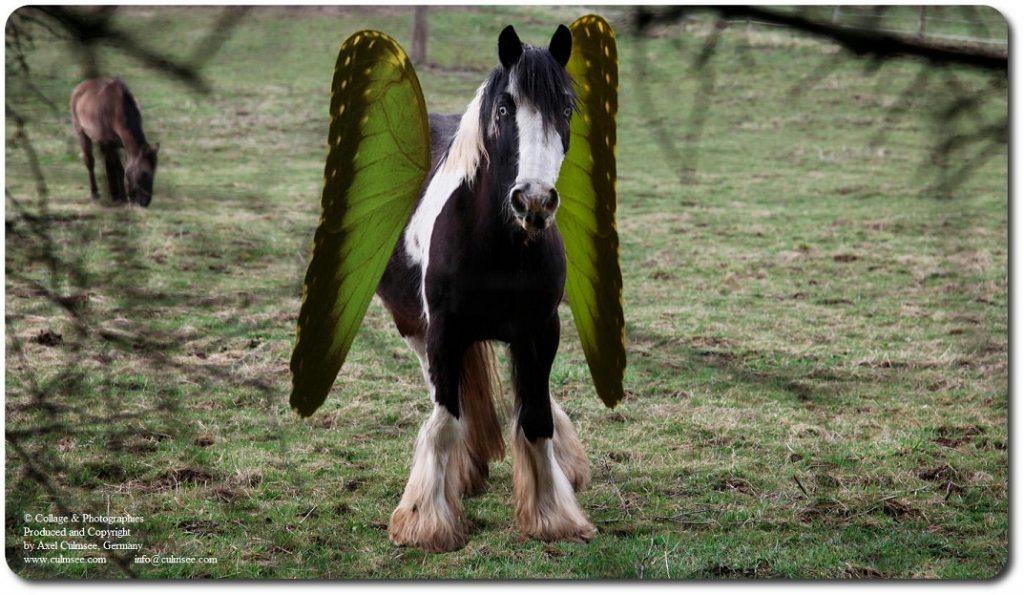 Pegasus breitet Fluegel aus ...