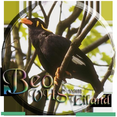 Blog von VHS-Scout Beo (webLog)