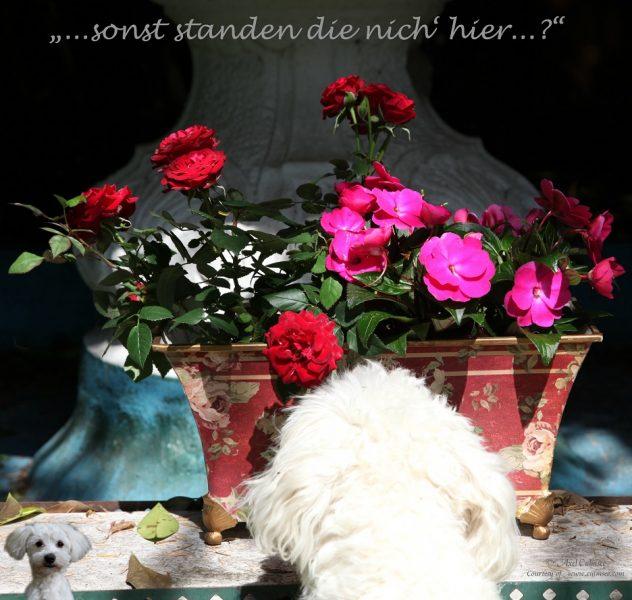 LuLu meets Roses