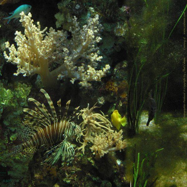 Aquarium Collage Lionfish Seahorses