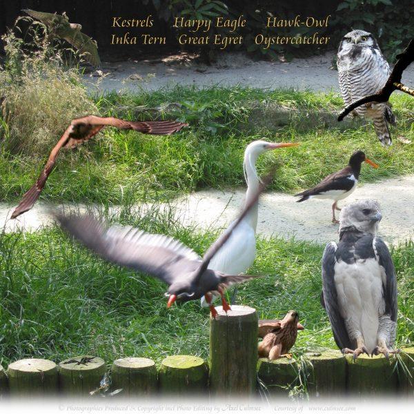 Birds Meeting II
