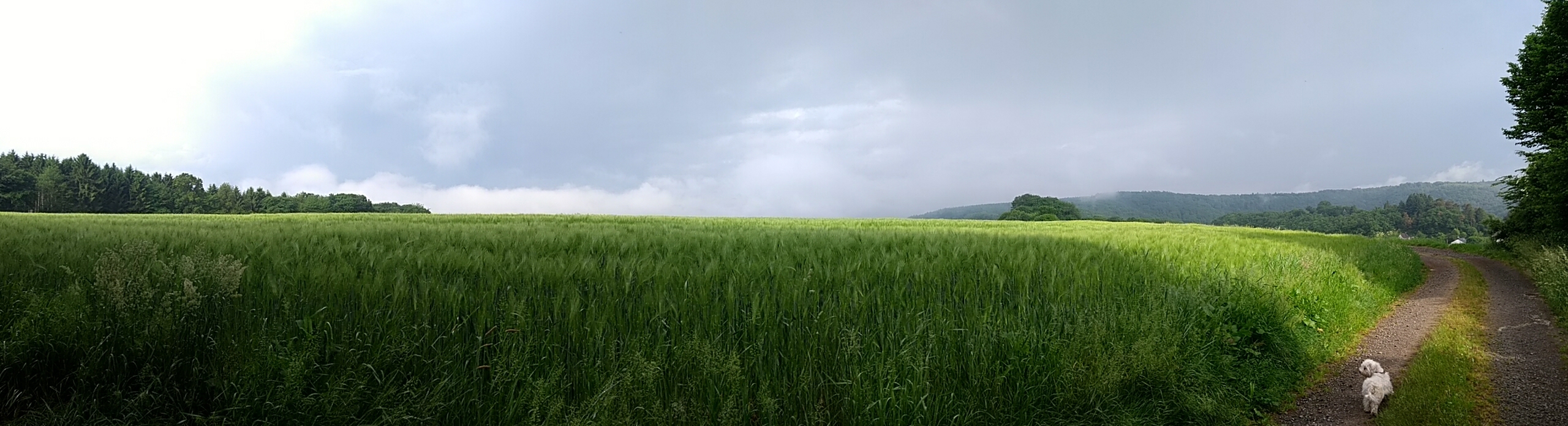 deep stormy horizon Westerwald panorama with Maltese LuLu