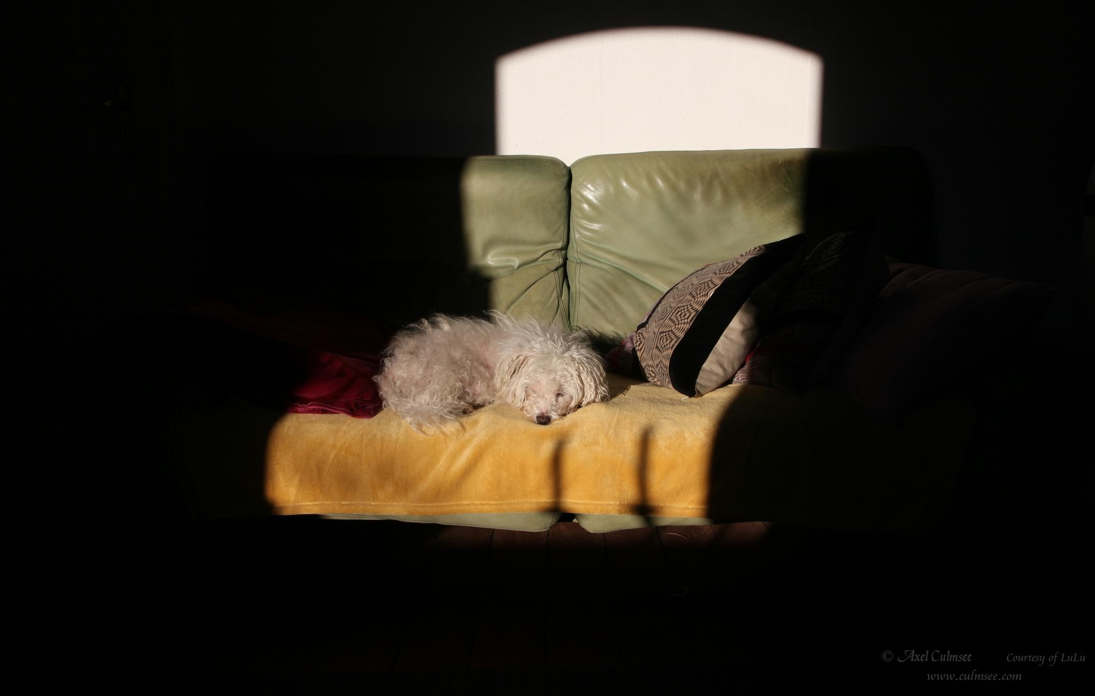 LuLu auf ihrem Sonne-Sofa