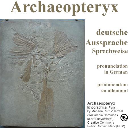 Archaeopteryx Aussprache