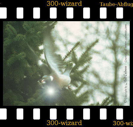 pigeon starts with luminescence wizard effect