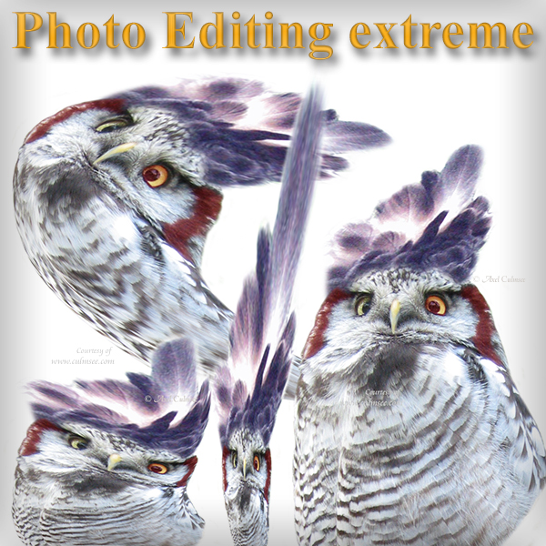 Smileys compilation Photo Editing extreme Hawk-Owls