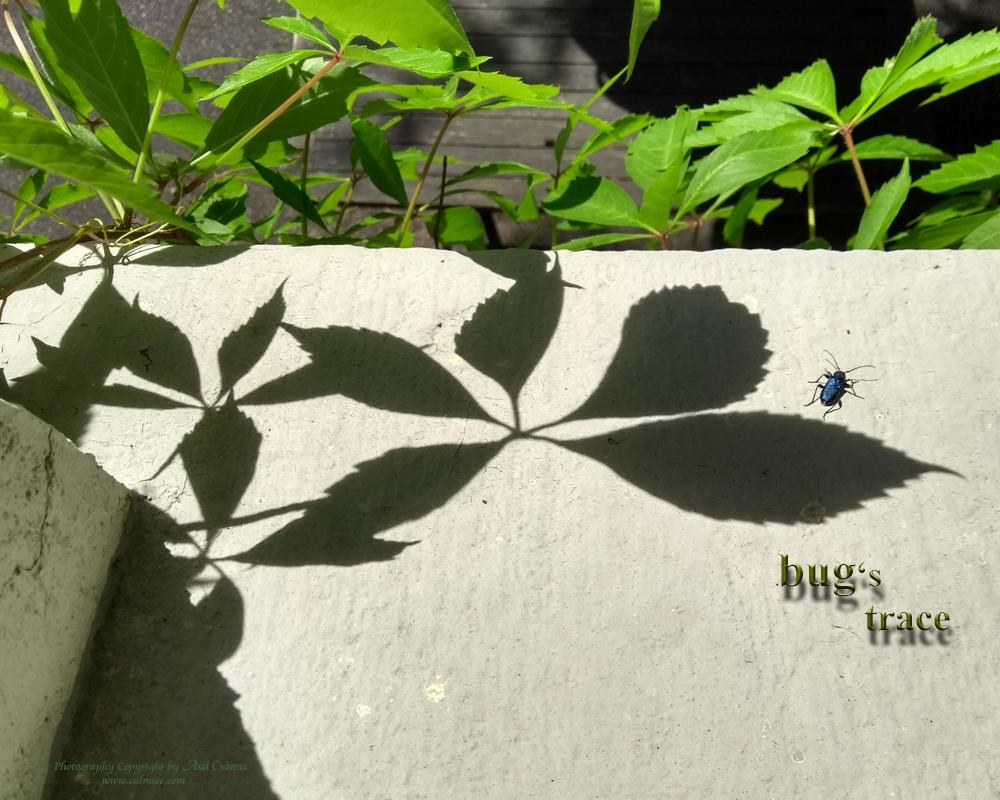bug's trace at sunshine
