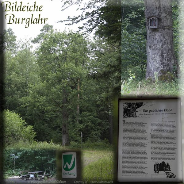 Burglahr Bildeiche Collage