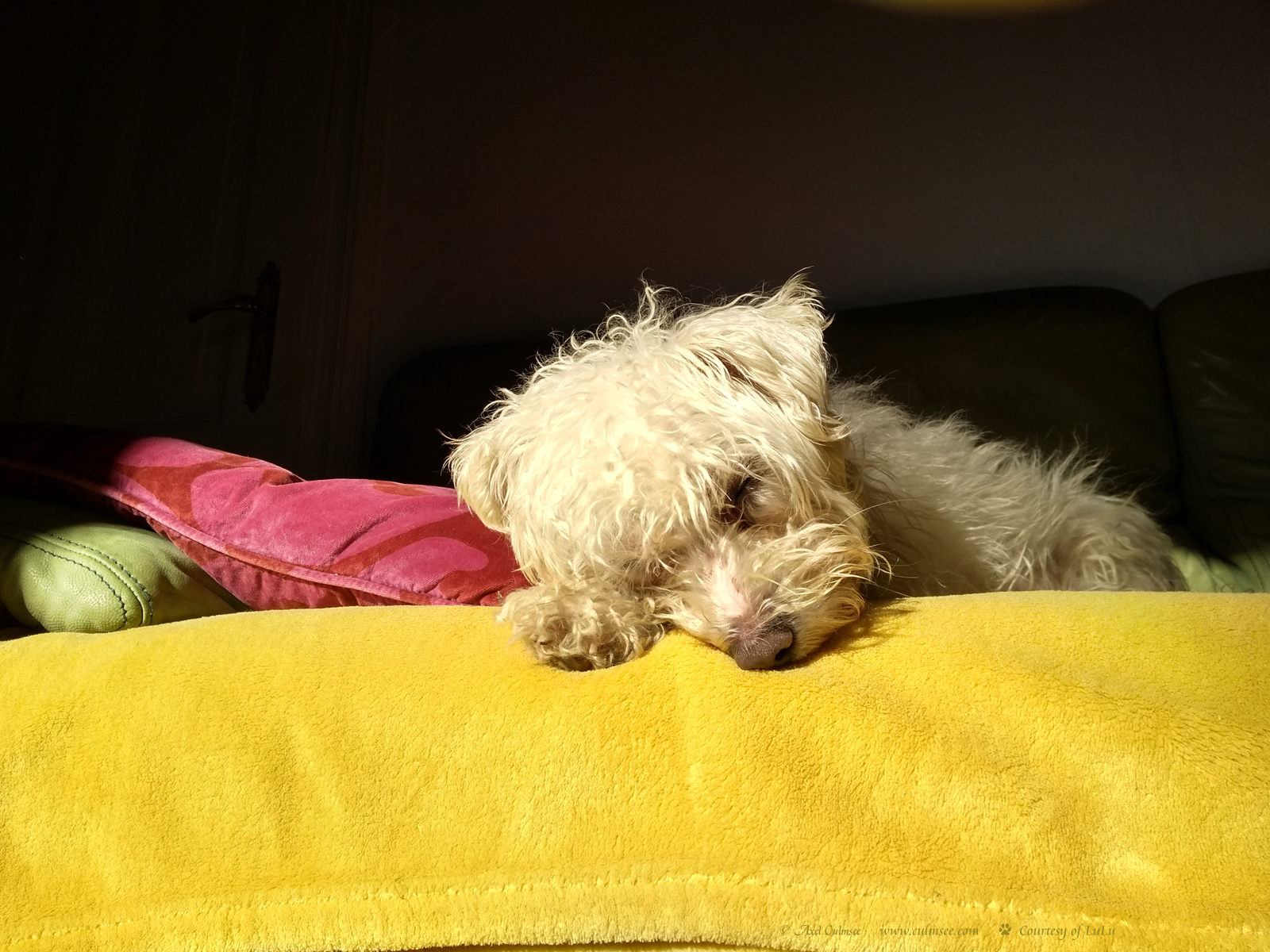 LuLu dreaming in the sun