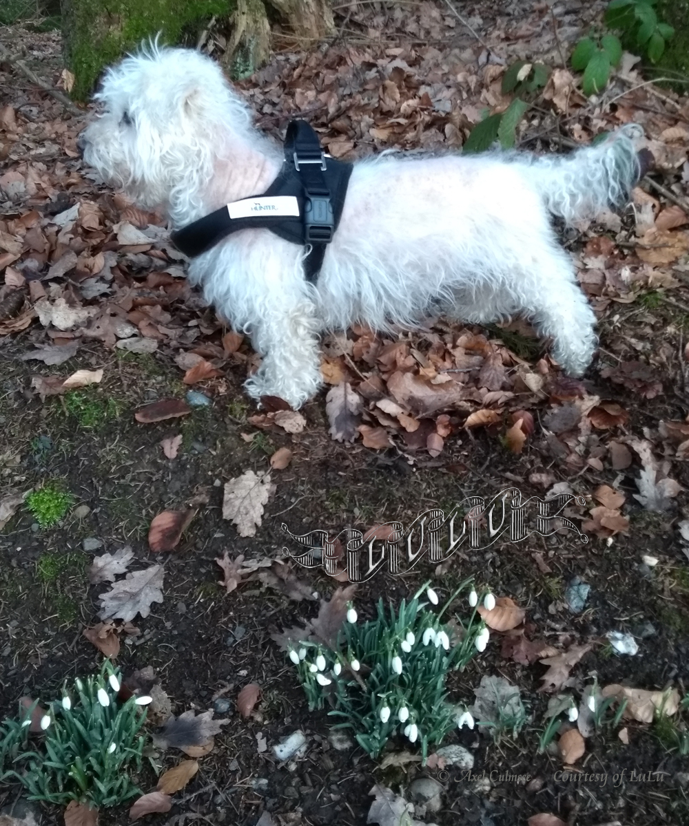 LuLu within forest with snowdrops