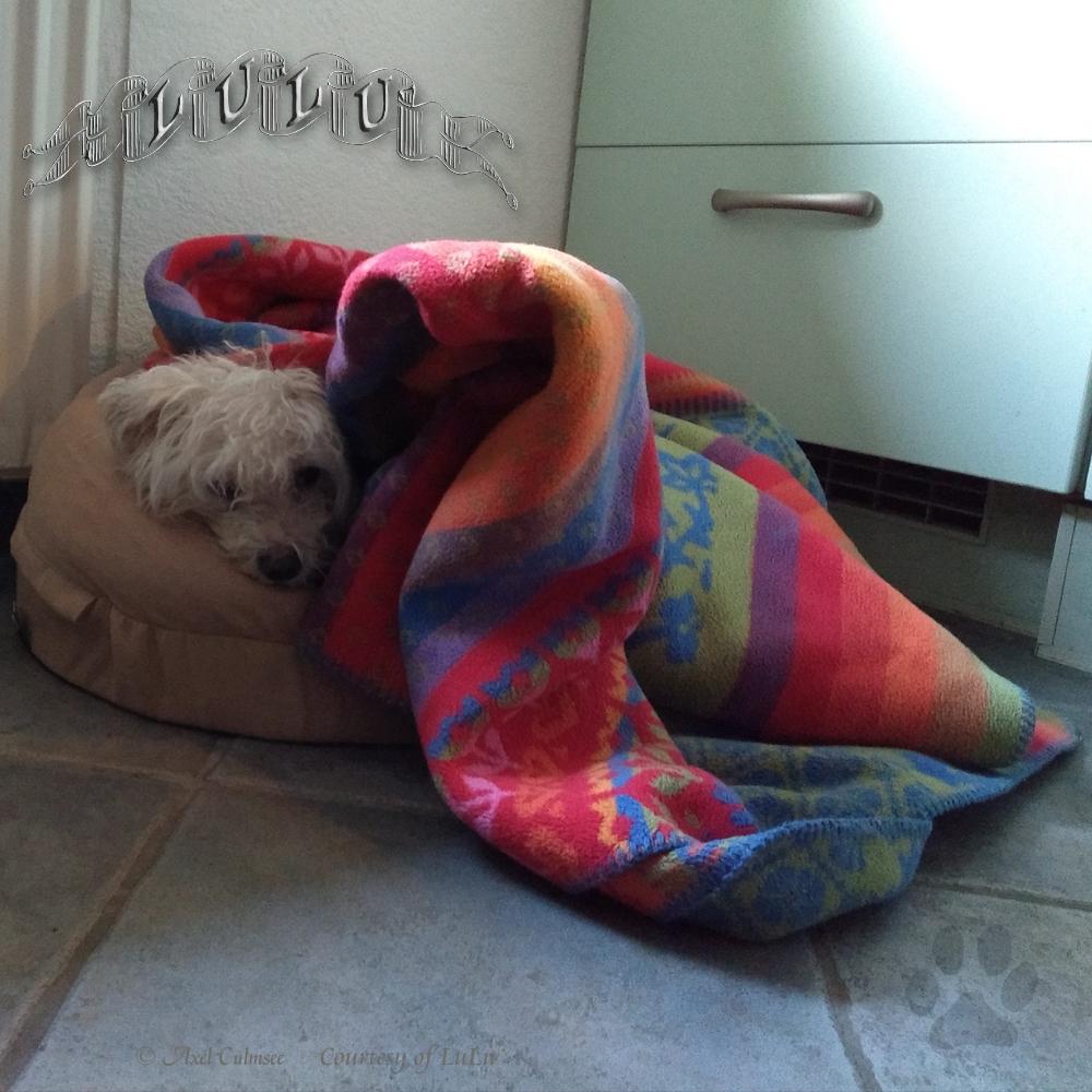 LuLu unter warmer Winterdecke