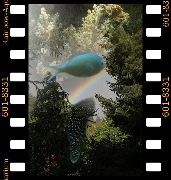 Rainbow-Aquarium collage ArtsFreestyle