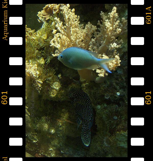 Aquarium Kiel no.601